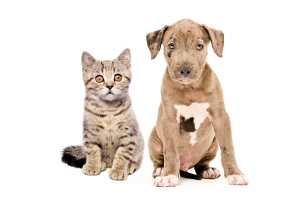 Pet medications